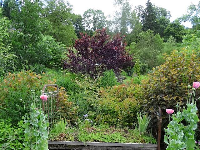 Le jardin de brigitte alsace visite au jardin de la for Le jardin en juin