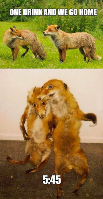 Funny One Drink And We Go Home Foxes Joke Picture
