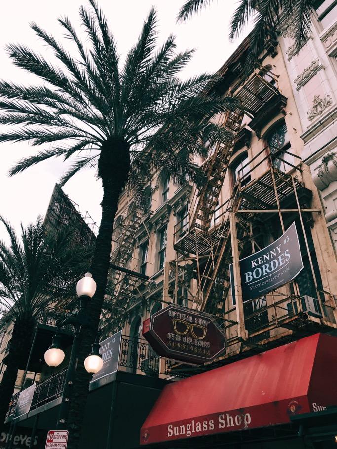 palm tree canal street