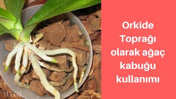 Orkide Toprağı olarak ağaç kabuğu kullanımı