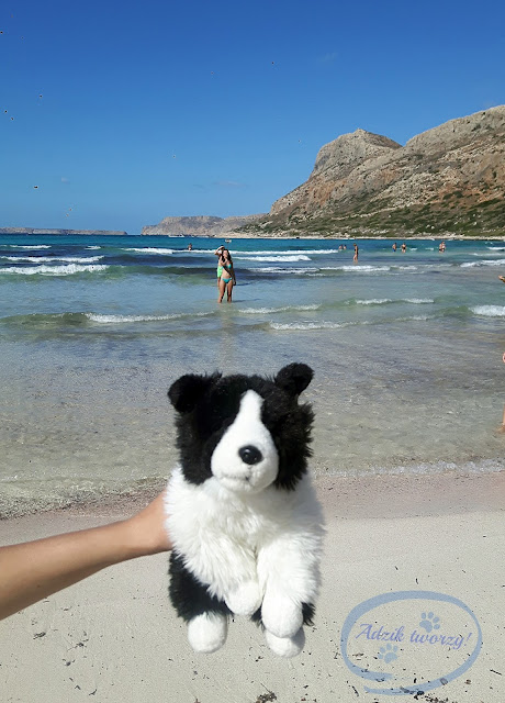 Maskotka border collie na wakacjach