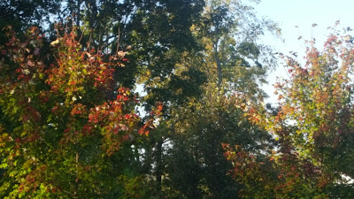 "Great Writing Resources and Robert Louis Stevenson's poem ""Autumn Fires"""