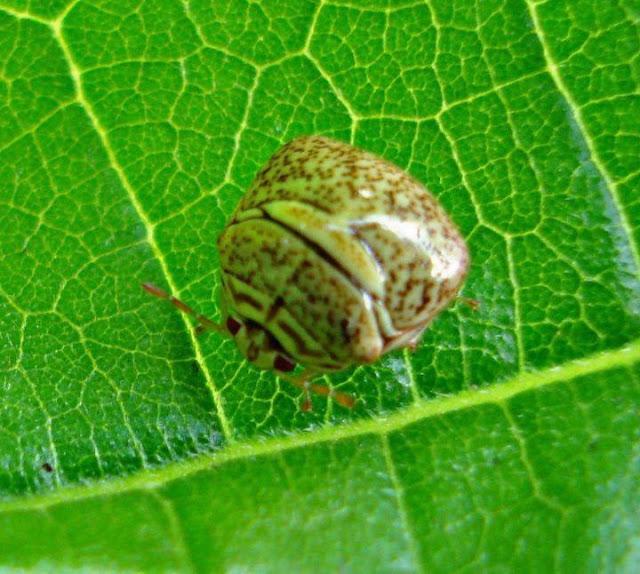Vivid nature photography ladybug on leaf