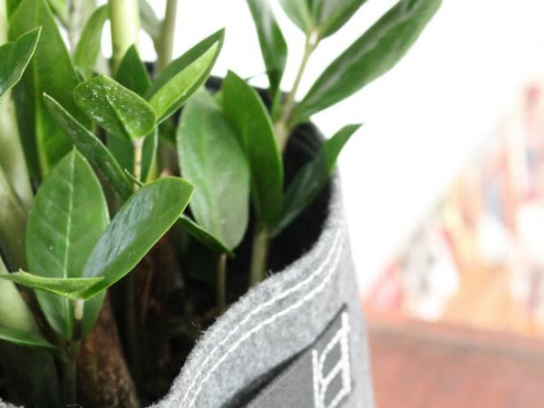 Bloembagz: un'idea green bella e innovativa all'insegna del riciclo
