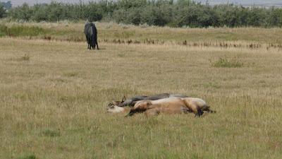 Empress, Alberta, animals, horses