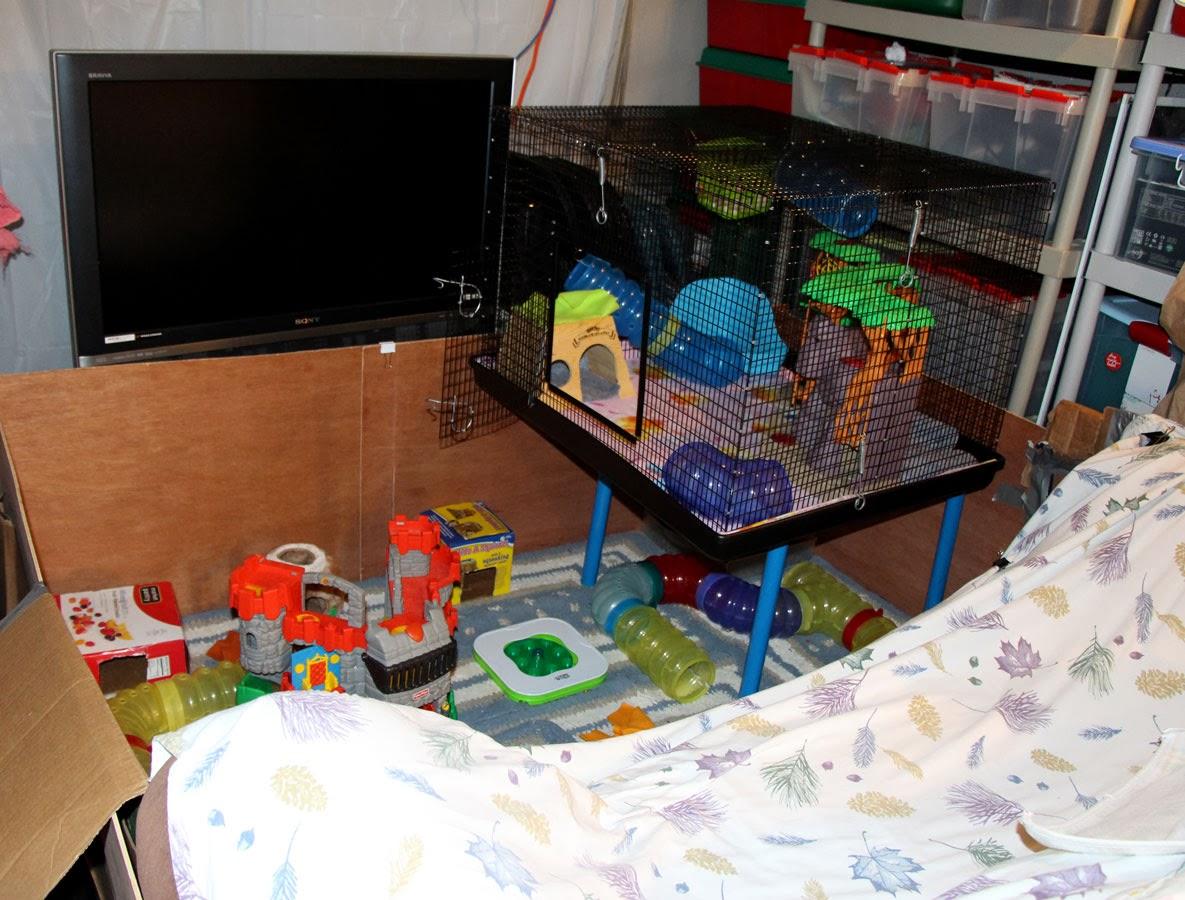 Pet Rat Play Area