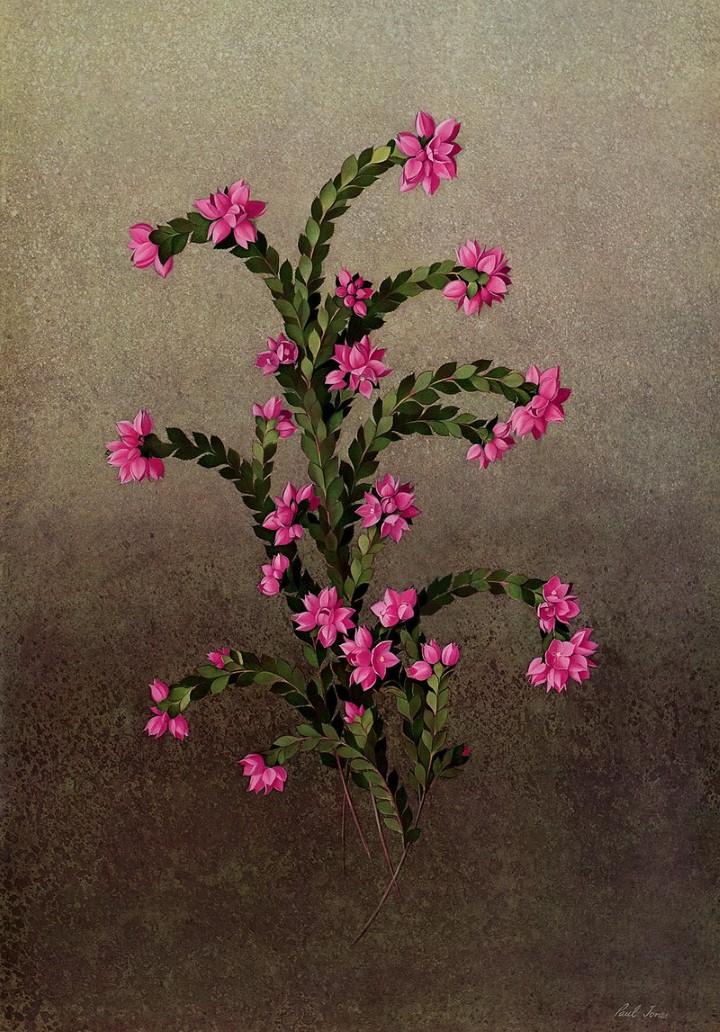 Paul Jones. Акварельные рисунки цветов 5