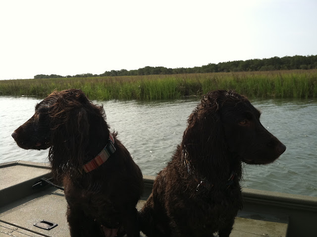 Boykin Spaniels | The Lowcountry Lady