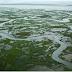 La tundra en Alaska emite cada vez más dióxido de carbono