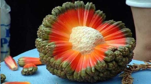 Pandanus Tectorius Nasıl Bir Meyve?