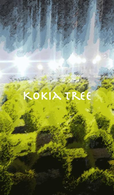 Kokia Tree