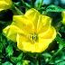 Bunga Mekar Saat Adzan Bunga ini Ada di Ajerbaizan, Luar Biasa Ajaib Bunga ini!