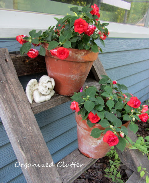 Photo of terracotta pots with impatiens on a ladder