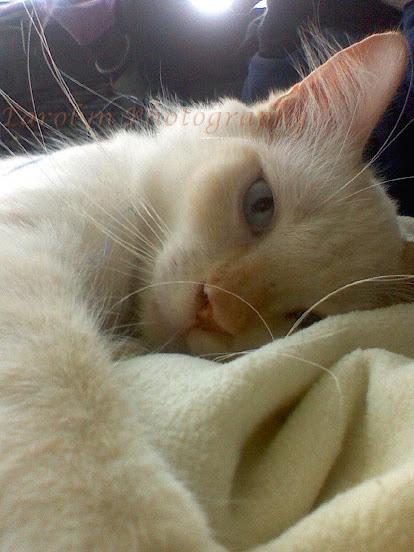 Cairo's Haunting Alluring Cat Eyes