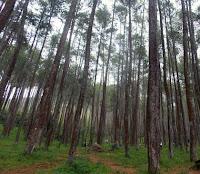 hutan kajar kota kudus jawa tengah