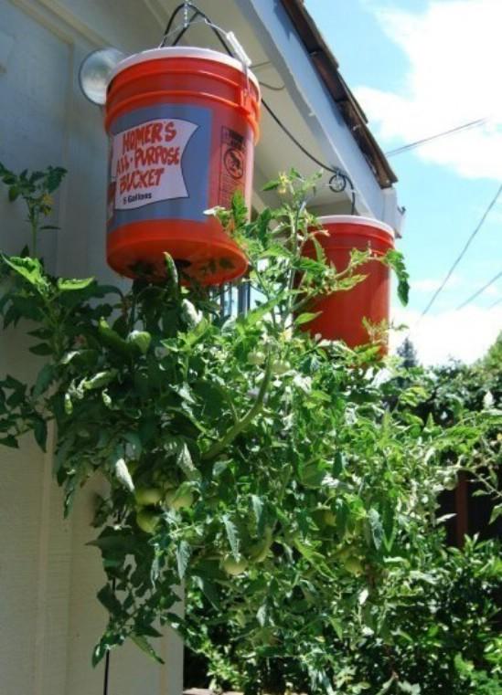 DIY%2BUpside%2BDown%2BTomato%2BPlanter 15 DIY Genius Project Ideas For Repurposing Old Gallon Buckets Interior