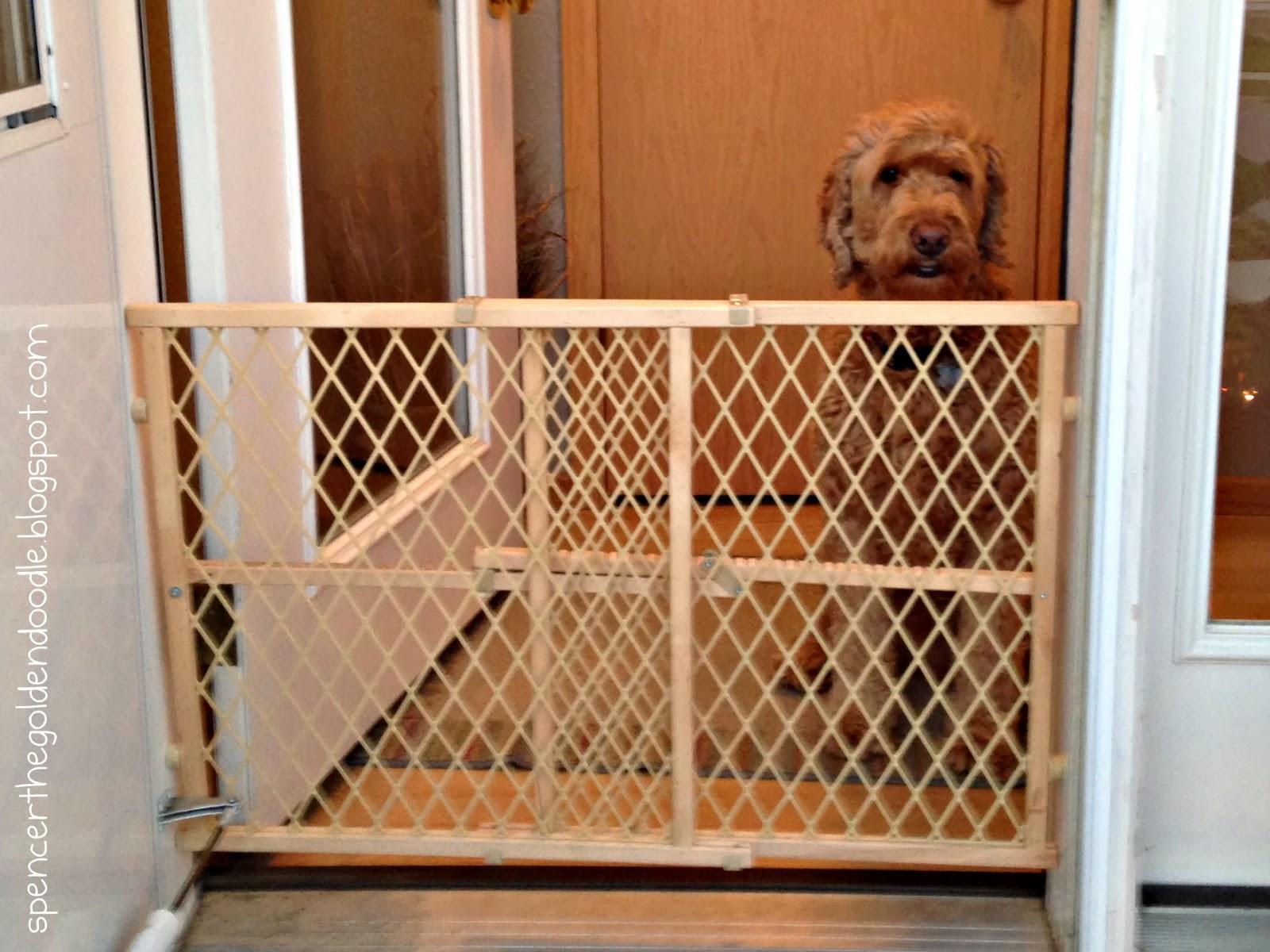 Hmh Designs Diy Dog Gate From A Bench A Tutorial