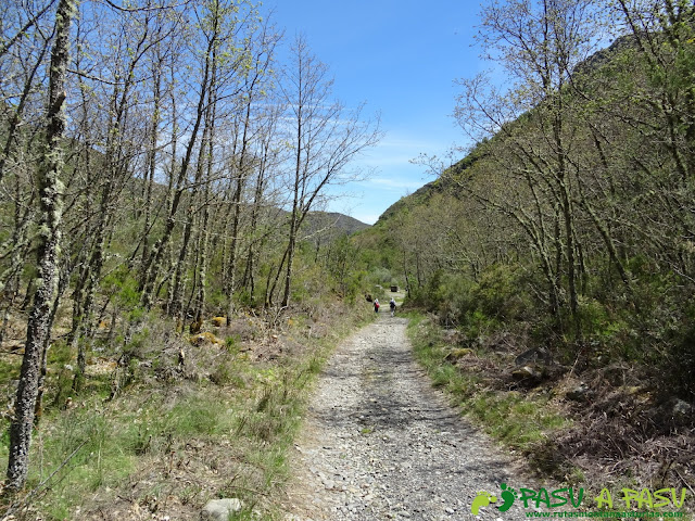 Ruta al Mustallar: Pista entre árboles