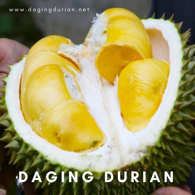 beli-disini-daging-durian-medan-bermutu-di-kraksaan