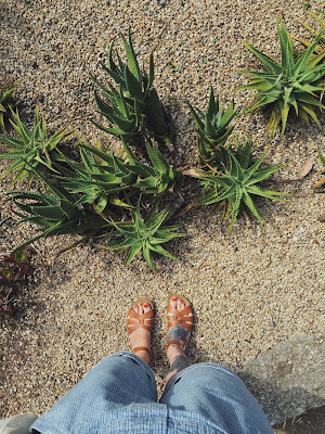 A picture of a woman wearing Saltwater Sandals stood near a succulent plant in San Francisco