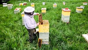 Honey Bee Farming,Honey Bee farming in India.Bee farming,Natural honey