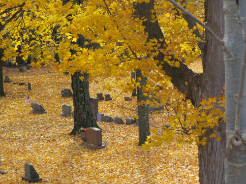 yellow autumn leaves in cemetery