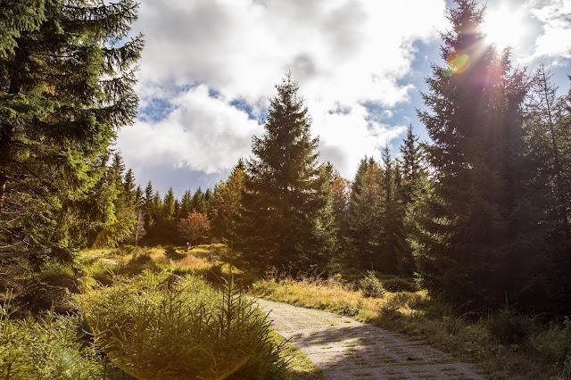 Bad Harzburger Teufelsstieg  Wanderung-Harz  Wandern – Von Bad-Harzburg auf den Brocken  Wandern-im-Harz  Abstieg Goetheweg zum Torfhaus 11