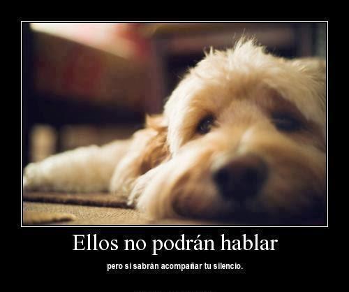 Frasesamor Frases Bonitas De Amor Por Los Animales