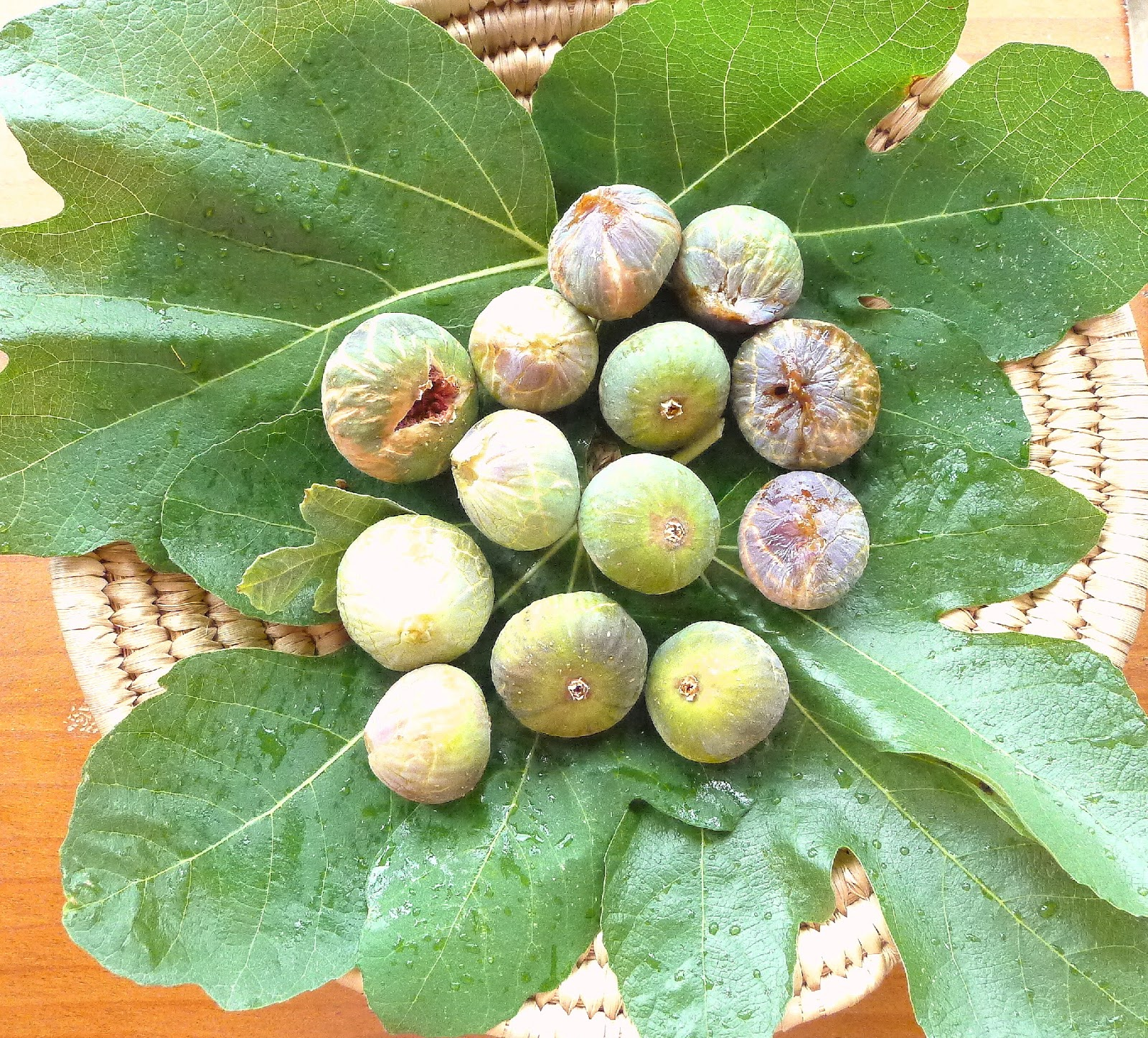ripe figs It has been a cool summer and our tree has a large amount of under ripe figs the frosts will be here in a couple of weeks so they need to be picked so what can be done with a large number of under.