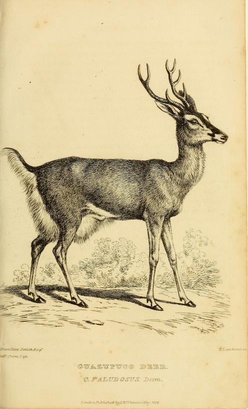 Relatos erticos de cornudos - Autopista hacia el ciervo