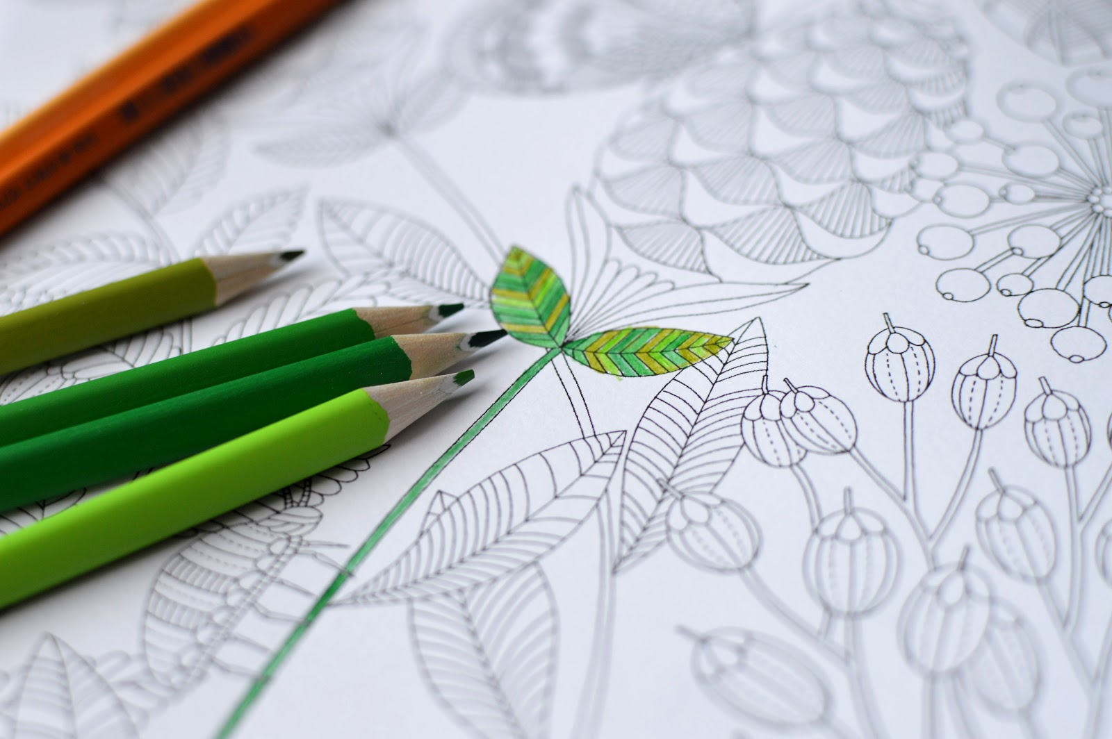 , Millie Marotta's Tropical Wonderland: a colouring book adventure