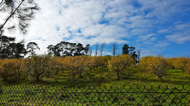 Pettys Orchard Templestowe