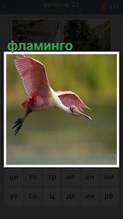 в полете фламинго розовый, размахивает крыльями