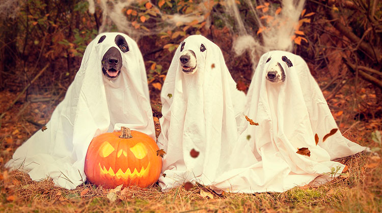 8 ideas para decorar tu casa en Halloween