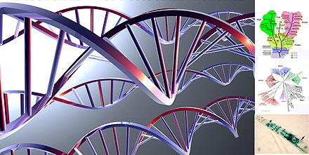 الوراثة الجزيئية Molecular genetics