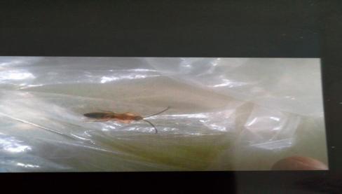 Ερώτηση αναγνώστη: Τι είναι αυτό το έντομο;