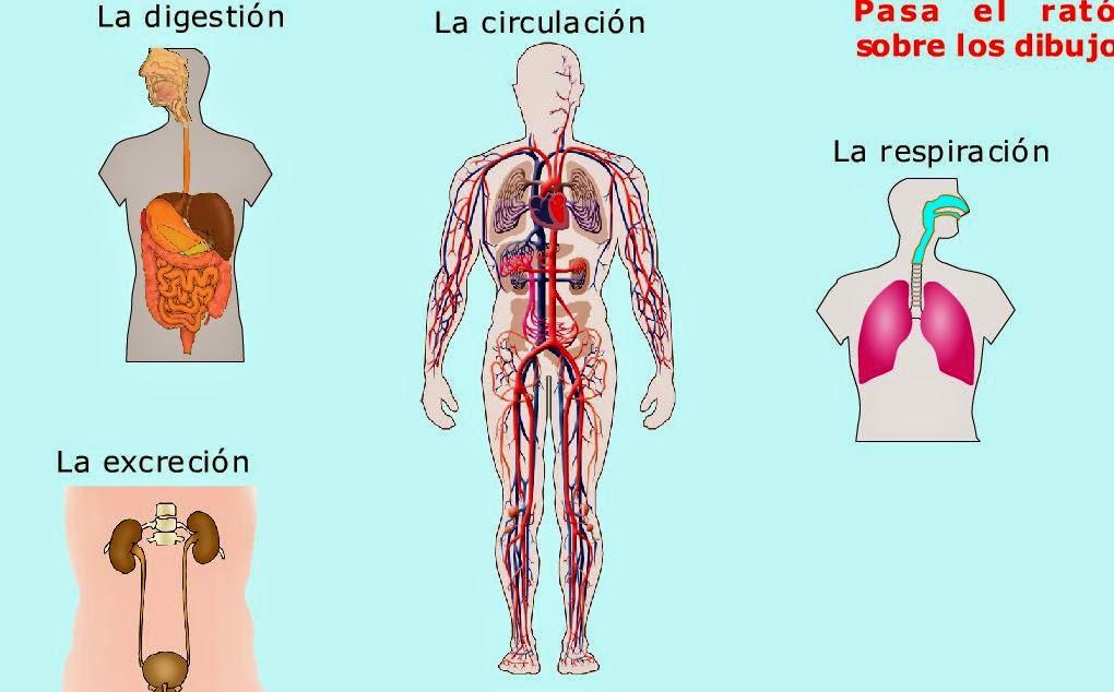 http://iespoetaclaudio.centros.educa.jcyl.es/sitio/upload/funcion_nutricion3eso.swf
