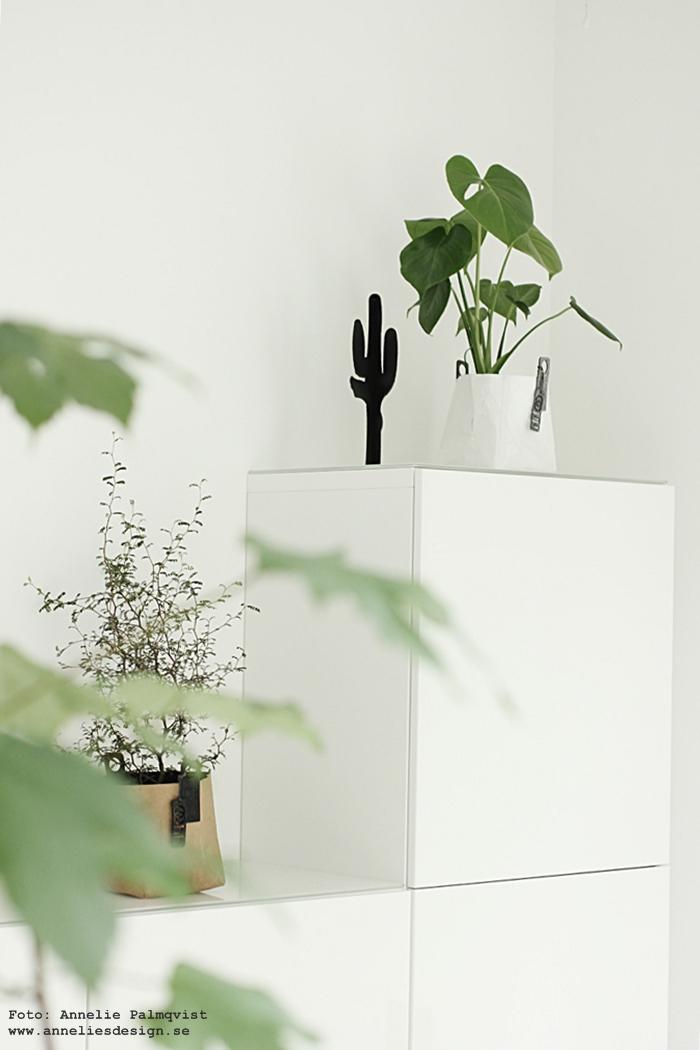 kaktus, design, inredning, kaktusar, prydnad, prydnader, dekorationer, dekoration, annelies design, webbutik, webbutiker, webshop, nettbutikk, nettbutikker, nätbutik, Oohh kruka, krukor, växter, monstera, grönt, ikea, bestå, skänk, förvaring, skåp, vitt, vit, svart och vitt, svartvit, svartvita, konsttryck, tiger, 50X70, stora tavlor, tavla, poster, posters, print, prints, plakat, plakater, böset ljusstake, ljusstakar, gästrum, gästrummet, vardagsrum, vardagsrummet,