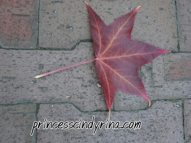 maple leaf on ground