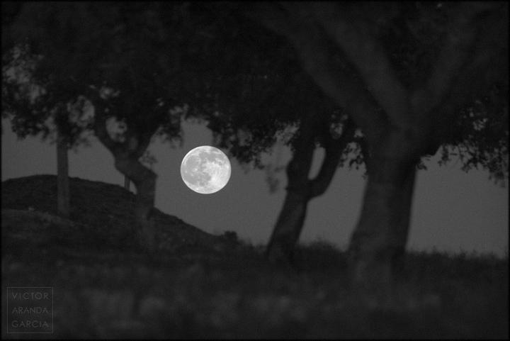 fotografia,luna_llena,murcia,arboles,naturaleza,paisaje