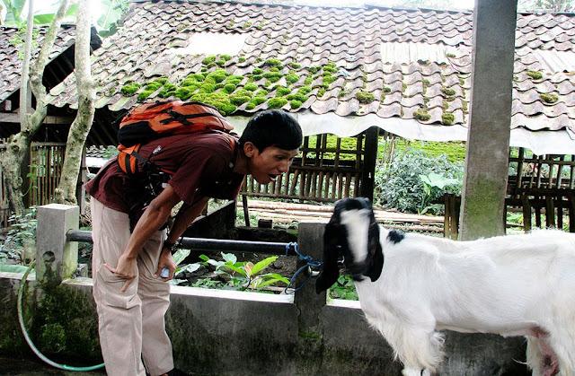 Niatnya mau mengabadikan abreng kambing, tapi kambingnya cuek aja