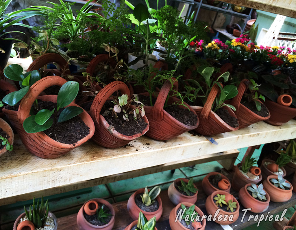 Naturaleza tropical marzo 2016 for Plantas ornamentales de guatemala