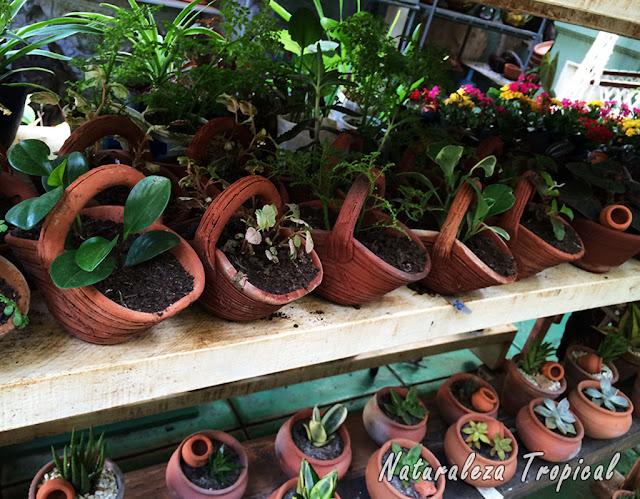 Plantas ornamentales en venta de un vivero