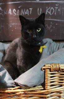 Opravdu černá kočička fotky