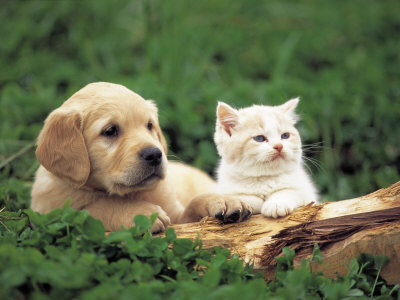 Most Interseting Cute Cats And Dogs