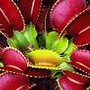 Ini Dia Macam-Macam Bunga Langka di Dunia