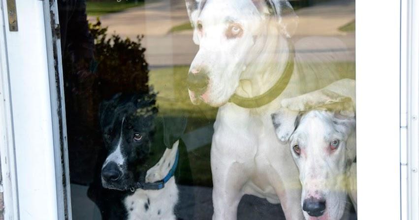 Rescue Dog Adoption Arlo