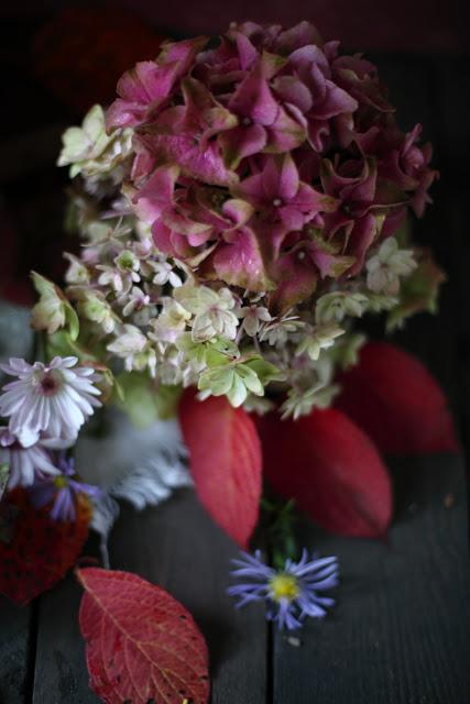 hortensia, hydrangea, colorful