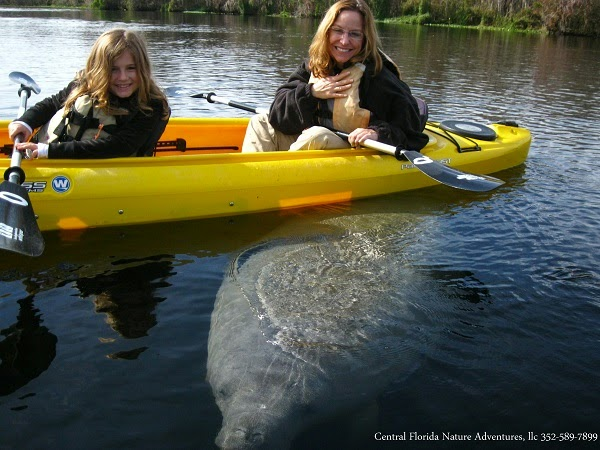Winter Manatee Tours