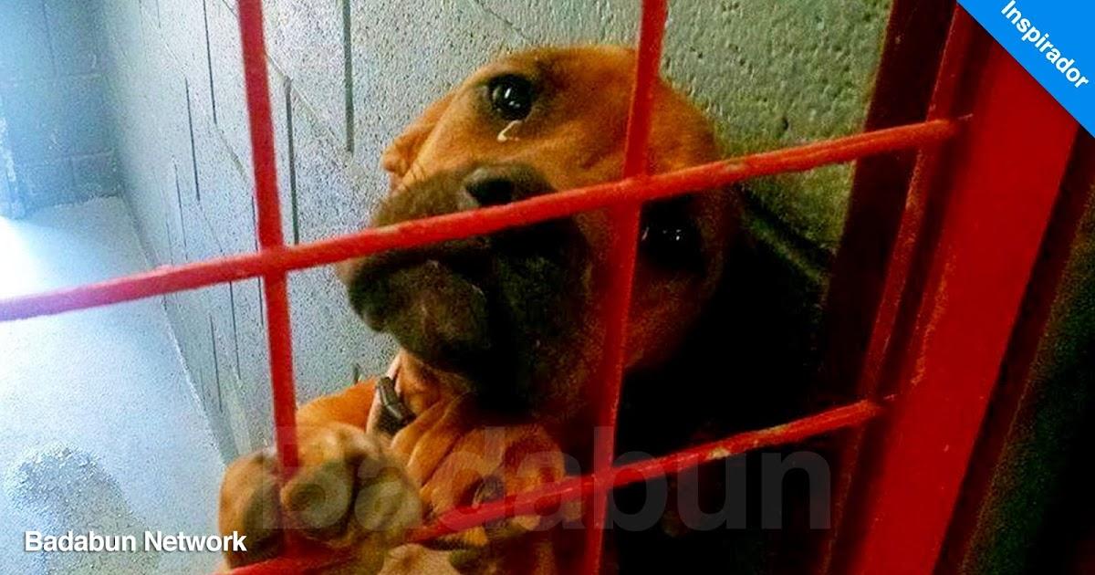 perros cachorra amor familia animales